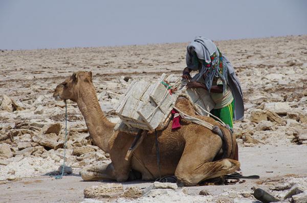 Lac Karoum - Les forçats du sel