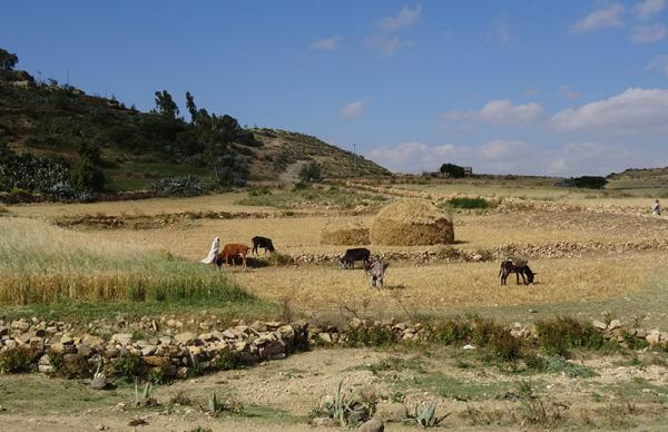 Plateau du Tigré